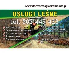 Usługi leśne Wycinka odkrzaczanie koszenie traw niwelacja pilarz